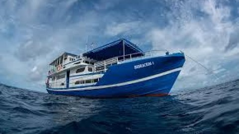 The Floating Surfhouse & a 71′ Charter Boat for Sale in Indonesia