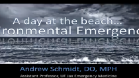A Day at the Beach by Andrew Schmidt